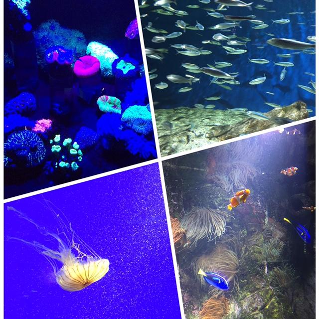Semaine IG - vacances Fouras - Aquarium La Rochelle