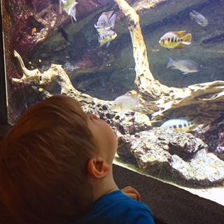 Semaine IG - Aquarium de la Porte Dorée