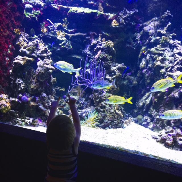 Semaine IG - Aquarium Porte Dorée