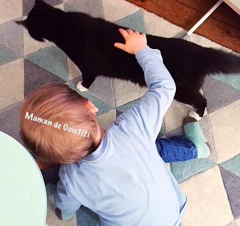 Boehringer - chat - traitement anti parasitaire