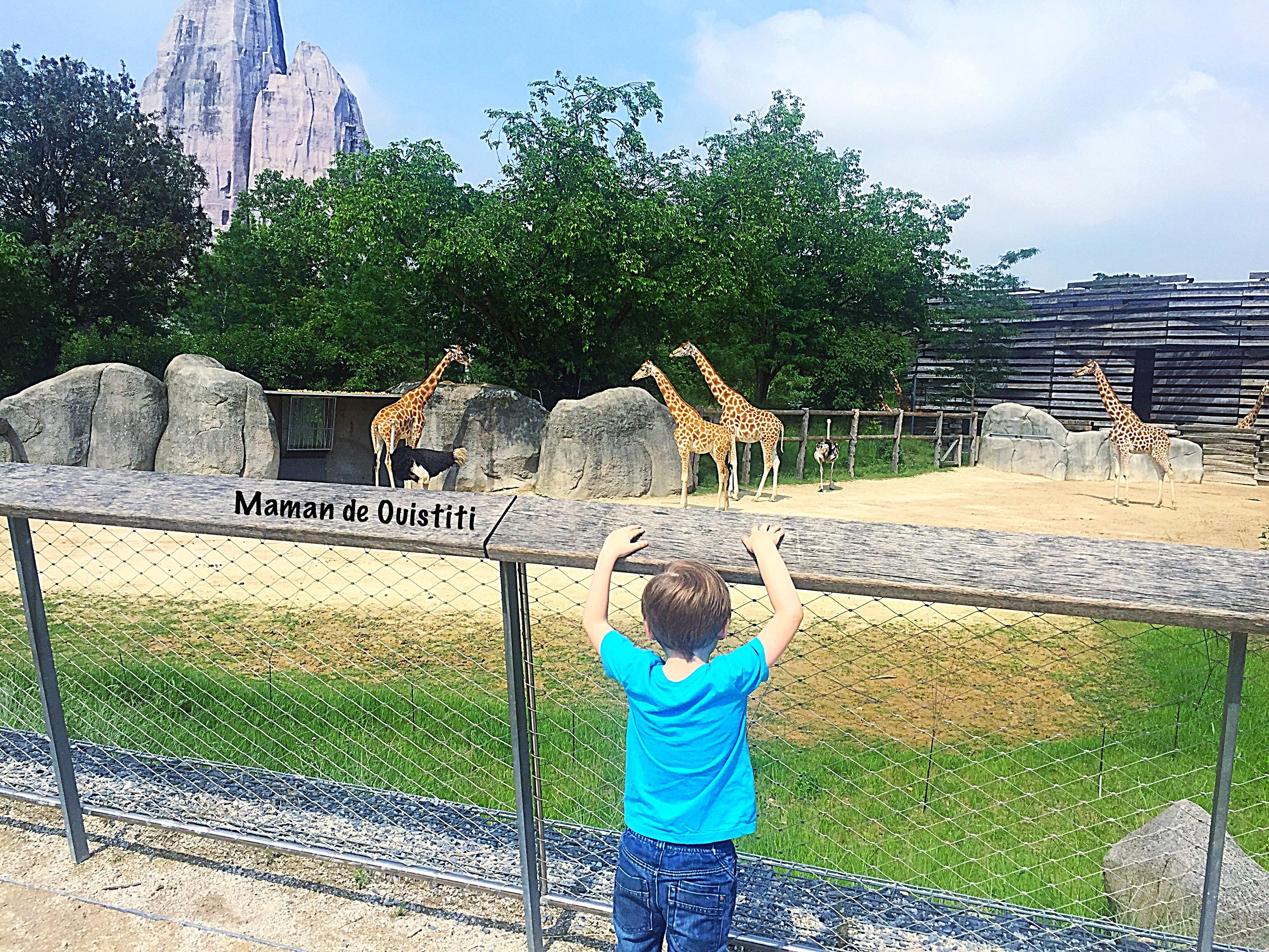 juin - parc zoologique de paris