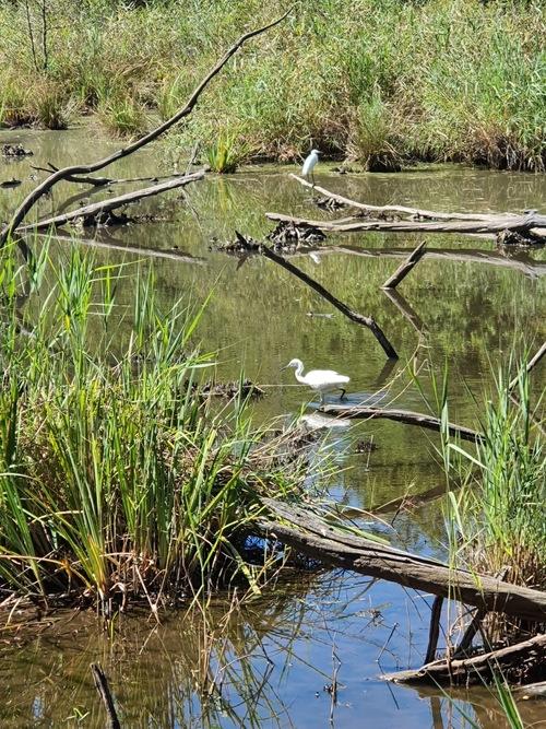 Madame Vacances Le Teich Réserve Ornithologique